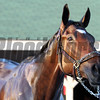 Nickname Churchill Downs Chad B. Harmon