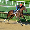 Horses on track at Churchill Downs in Louisille, Ky., on April 29, 2016. Go Maggie Go