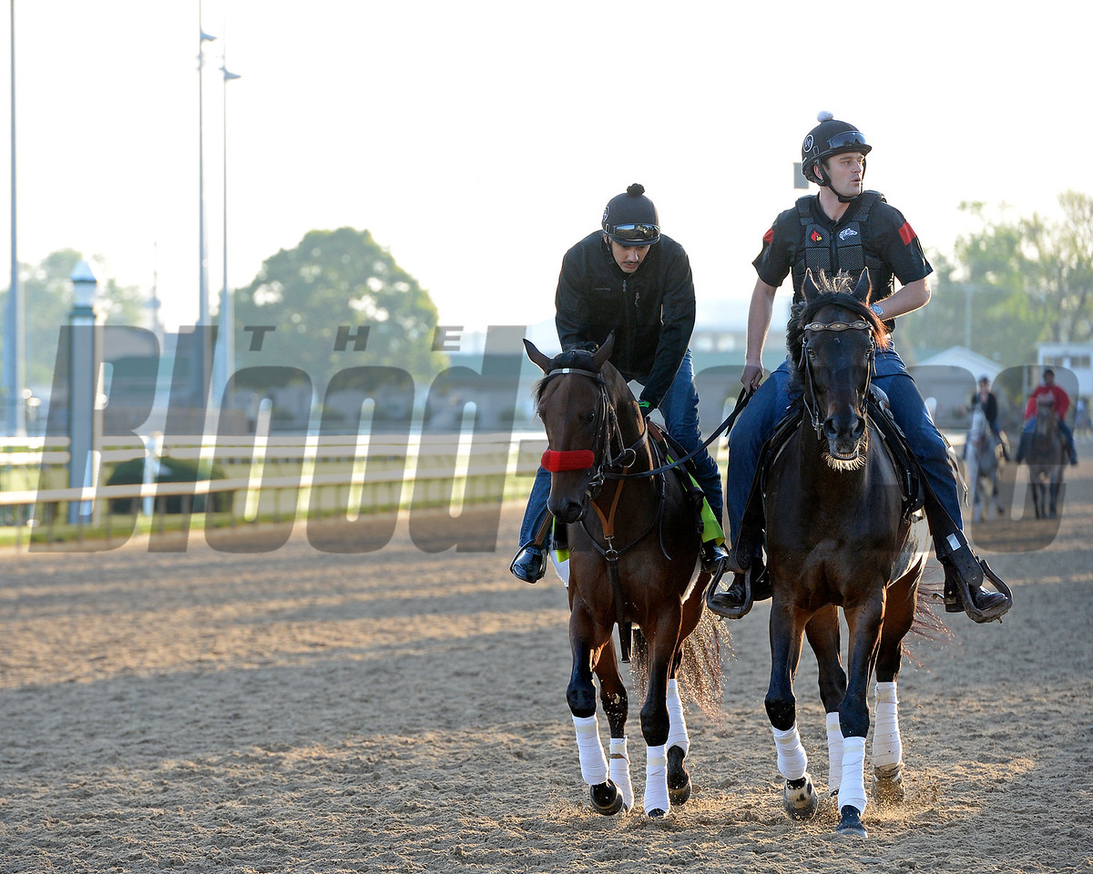 Nyquist with Jonny Garcia and Jack Sisterson on Satire going by the barn area crowd.<br /> Works at Churchill Downs on May 4, 2016, in Louisville, Ky.