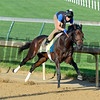Horses on track at Churchill Downs in Louisille, Ky., on April 29, 2016. Mo Tom