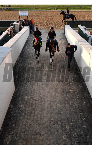 Nyquist out for morning work May 4, 2016 Pre Derby. Photo by Skip Dickstein