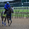 Moheyman out for morning work May 4, 2016 Pre Derby. Photo by Skip Dickstein