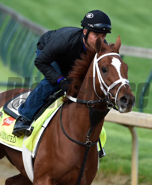 Oscar Nominated gets morning exercise May 5, 2016 at Churchill Downs in Louisville, K.Y.  Photo by Skip Dickstein