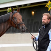 trainer Doug O'Neill with Nyquist<br /> Works at Churchill Downs on May 3, 2016, in Louisville, Ky.