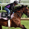 Go Maggie Go Churchill Downs Chad B. Harmon