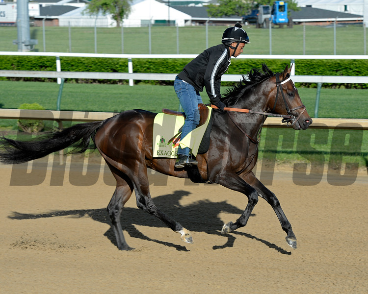 Horses on track at Churchill Downs in Louisille, Ky., on April 29, 2016. Exaggerator