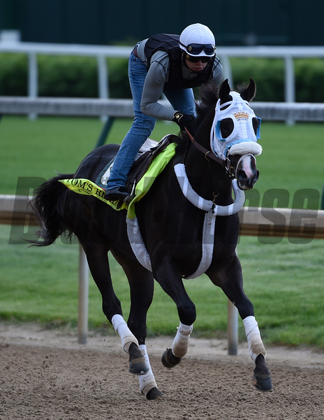 Tom's Ready May 4, 2016 Pre Derby. Photo by Skip Dickstein