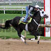 Tom's Ready Churchill Downs Chad B. Harmon