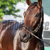 Majesto Churchill Downs Chad B. Harmon