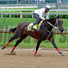 Majesto<br /> Works at Churchill Downs on May 3, 2016, in Louisville, Ky.