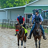 Nyquist with Jonny Garcia jogging with Jack Sisterson on Satire.<br /> Works at Churchill Downs on May 1, 2016, in Louisville, Ky.