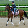 Go Maggie Go<br /> Works at Churchill Downs on May 1, 2016, in Louisville, Ky.
