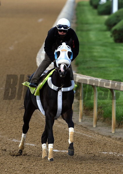 Tom's Ready gets morning exercise May 5, 2016 at Churchill Downs in Louisville, K.Y.  Photo by Skip Dickstein