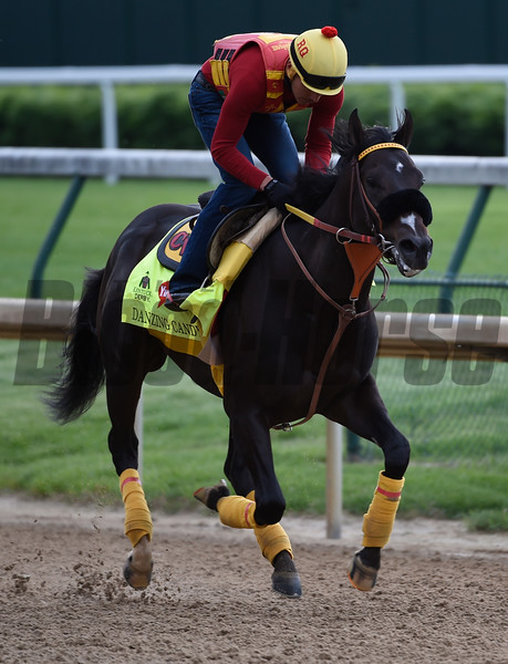 Danzing Candy out for morning work May 4, 2016 Pre Derby.  Photo by Skip Dickstein