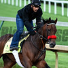 Noquest gets morning exercise May 5, 2016 at Churchill Downs in Louisville, K.Y.  Photo by Skip Dickstein