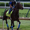 MoTom out for morning work May 4, 2016 Pre Derby. Photo by Skip Dickstein