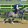Horses on track at Churchill Downs in Louisille, Ky., on April 29, 2016. Mohaymen