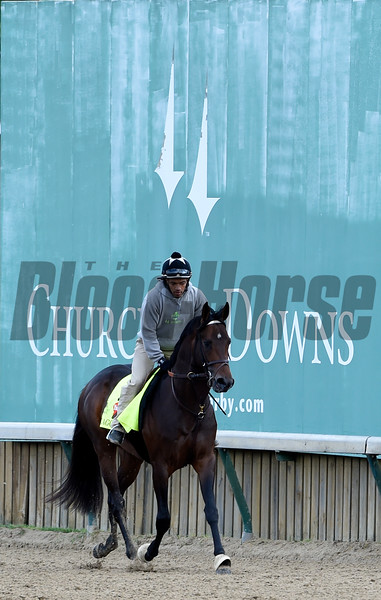 Exaggerator gets morning exercise May 5, 2016 at Churchill Downs in Louisville, K.Y.  Photo by Skip Dickstein