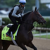 My Man Sam out for morning work May 4, 2016 Pre Derby. Photo by Skip Dickstein
