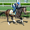 Horses on track at Churchill Downs in Louisille, Ky., on April 29, 2016. Dazzling Gem