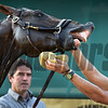 Trainer Keith Desormeaux eyes Kentucky Derby Runner-up Exaggerator Friday morning May 20, 2016 after morning exercise in preparation for Saturday's 141st running of the Preakness Stakes at Pimlico Race Course in Baltimore, MD.  Photo by Skip Dickstein