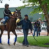 Uncle Lino out for his exercise at Pimlico Race Course Thursday May 19, 2016.  Photo by Skip Dickstein