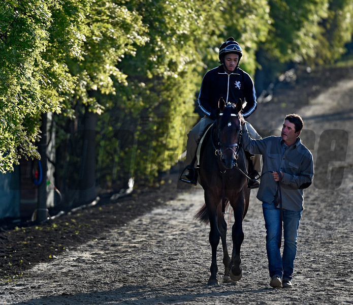 Trainer Keith Desormeaux walks Kentucky Derby Runner-up Exaggerator Friday morning May 20, 2016 after morning exercise in preparation for Saturday's 141st running of the Preakness Stakes at Pimlico Race Course in Baltimore, MD.  Photo by Skip Dickstein