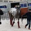 Japanese horse Lani arrives at Pimlico Race Course Thursday May 19, 2016.  Photo by Skip Dickstein