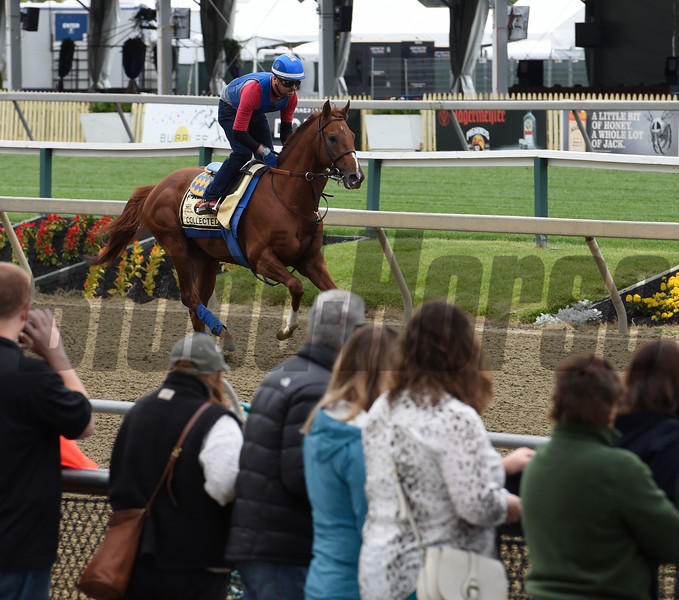 Collected out for his exercise at Pimlico Race Course Thursday May 19, 2016.  Photo by Skip Dickstein