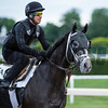 Tapwrit is out for morning exercise Wednesday morning June 7, 2017 at Belmont Park in Elmont, N.Y. days before the Belmont Stakes Photo by Skip Dickstein