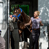 Songbird arrives from her home base in California in the hands of Jerry Hollendorfer's assistant Christina Jelm Wednesday June 7, 2017 at Belmont Park in Elmont, N.Y. where she will run Saturday in the Ogden Phipps.  Photo by Skip Dickstein
