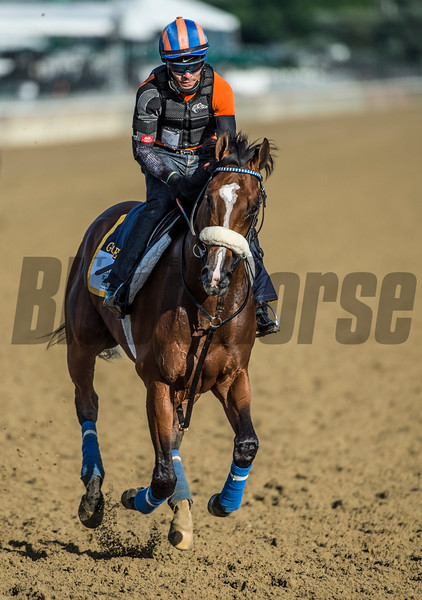 Gormley out for his morning exercise Thursday June 8, 2017 at Belmont Park in Elmont, N.Y. in preparation for Saturday's Belmont Stakes.  Photo by Skip Dickstein