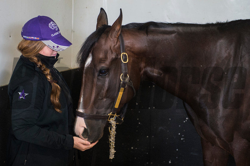 Classic Empire stands in his stall with handler Sara Campion after being declared out of the Belmont Stakes June 7, 2017 at Belmont Park in Elmont, N.Y. Photo by Skip Dickstein