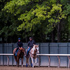 Meantime with trainer Brian Lynch on his pony is out for his morning exercise before the Belmont Stakes June 7, 2017 at Belmont Park in Elmont, N.Y. Photo by Skip Dickstein