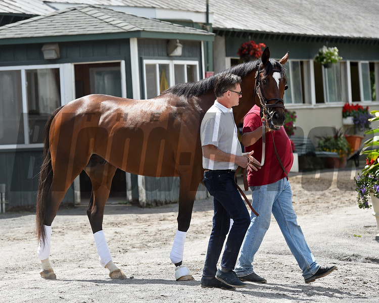 Lookin At Lee arrives at Belmont Park on June 1, 2017<br /> Coglianese Photos/Chelsea Durand