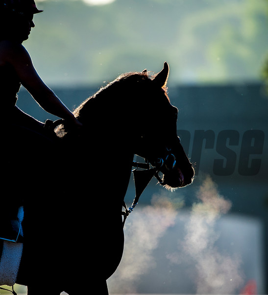 An unusually cool morning during training hours shows visual evidence of the chill in the air as the steam flows from the nose of a Tony Durrow trainee at Belmont Park June 8, 2017 in Elmont, N.Y.   Photo by Skip Dickstein