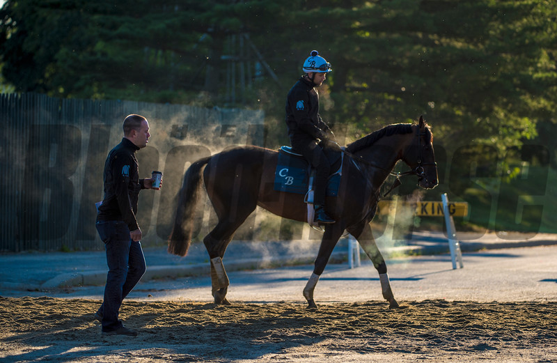 Trainer Chad Brown follows and of his trainees during an unusually cool morning during training hours which shows visual evidence of the chill in the air as the steam flows from the nose and body of one of his trainees at Belmont Park June 8, 2017 in Elmont, N.Y.   Photo by Skip Dickstein