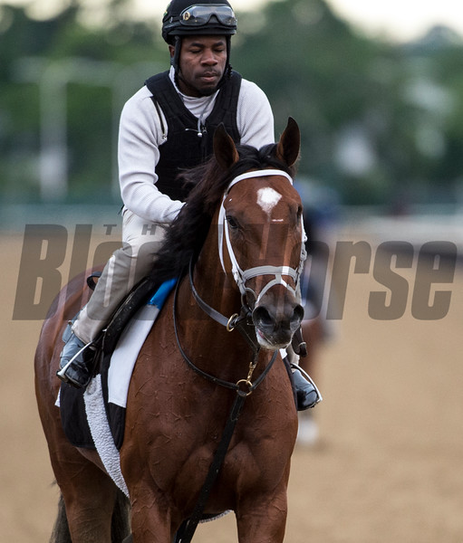 Patch is out for his morning exercise before the Belmont Stakes June 7, 2017 at Belmont Park in Elmont, N.Y. Photo by Skip Dickstein