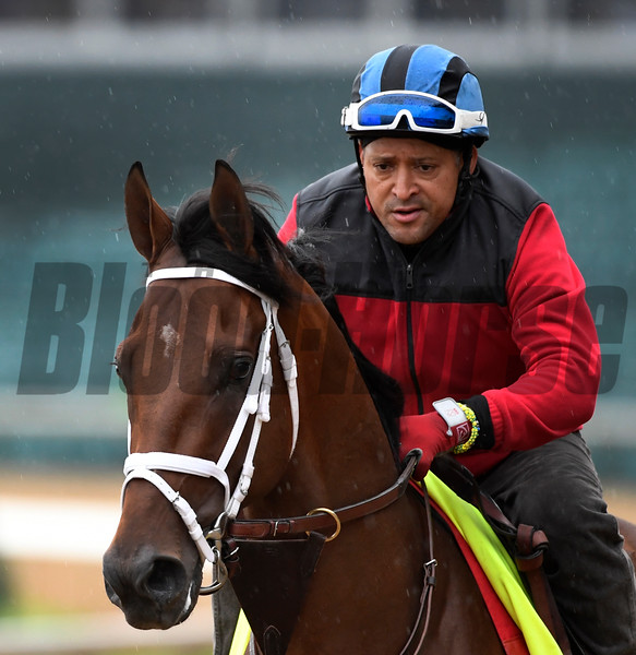 State of Honor out for exercise Wednesday morning May 4, 2017 in preparation for Saturday's 143rd running of the Kentucky Derby at Churchill Downs in Louisville, Kentucky.  Photo by Skip Dickstein