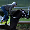 Girvin gallops at Churchill Downs May 3, 2017 in Louisville, KY.  Photo by Skip Dickstein