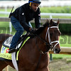 Master Plan gallops at Churchill Downs May 3, 2017 in Louisville, KY.  Photo by Skip Dickste