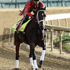 Classic Empire gallops at Churchill Downs May 3, 2017 in Louisville, KY.  Photo by Skip Dickstein
