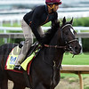 McCracken gallops at Churchill Downs May 3, 2017 in Louisville, KY.  Photo by Skip Dickste