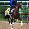 Thunder Snow out for exercise Wednesday morning May 4, 2017 in preparation for Saturday's 143rd running of the Kentucky Derby at Churchill Downs in Louisville, Kentucky.  Photo by Skip Dickstein