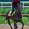 McCracken out for exercise Wednesday morning May 4, 2017 in preparation for Saturday's 143rd running of the Kentucky Derby at Churchill Downs in Louisville, Kentucky.  Photo by Skip Dickstein
