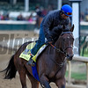Royal Mo gallops at Churchill Downs May 3, 2017 in Louisville, KY.  Photo by Skip Dicksten