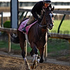 Paradise Woods gallops at Churchill Downs May 3, 2017 in Louisville, KY.  Photo by Skip Dickste