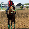 Conquest Mo Money Pimlico Chad B. Harmon
