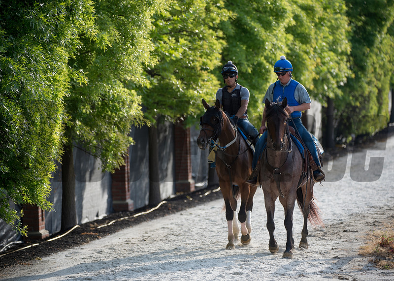 Lookin At Lea returns from his morning exercise two days before the Preakness Stakes at Pimlico Race Course Thursday May 18, 2017 in Baltimore, Maryland.  Photo by Skip Dickstein