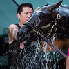 Always Dreaming gets a bath after his morning exercise  two days before the Preakness Stakes at Pimlico Race Course Thursday May 18, 2017 in Baltimore, Maryland.  Photo by Skip Dickstein